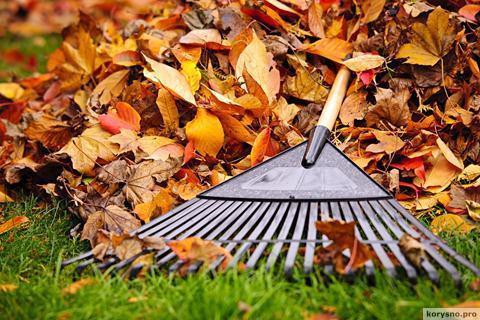 7 полезных идей что делать с опавшими листьями