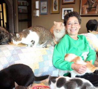 Кошкин дом. 1100 кошек и одна женщина.