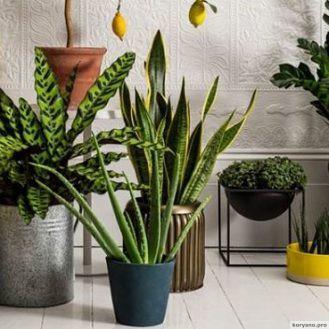 10 растений для идеального микроклимата в доме. ФОТО