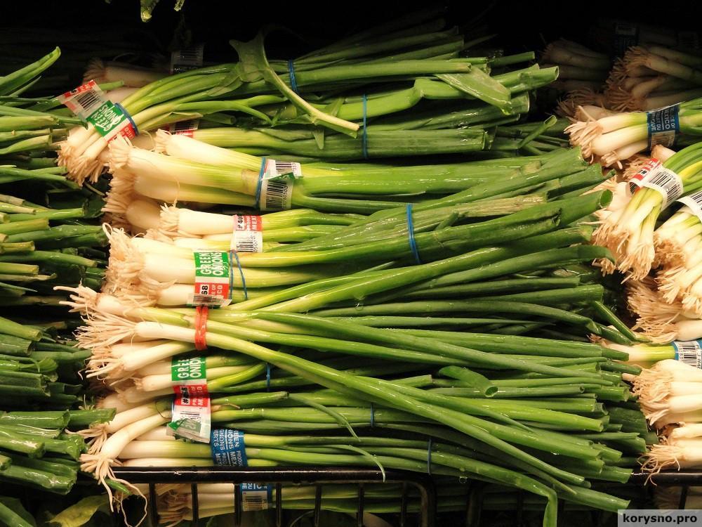 Есть 11 разных сортов лука. Вот как их правильно использовать!