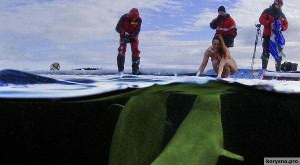 Заполярье, ледяное море (- 1,5°), две белухи и… девушка! Это просто невероятно!