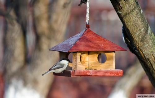 Оригинальные смодельные и дизайнерские кормушки для птиц
