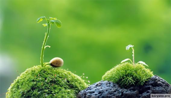Растения обладают куда большим интеллектом, чем мы привыкли думать