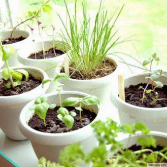 Выращиваем травы на кухне: идеи для мини-сада