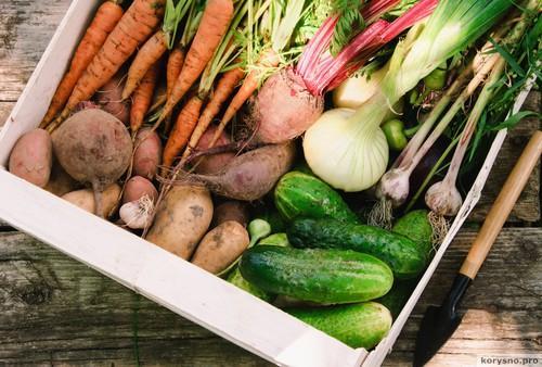 Шопинг с экологом: крабовые палочки без крабов, тушь для ресниц с гормонами и мавзолей из фруктов