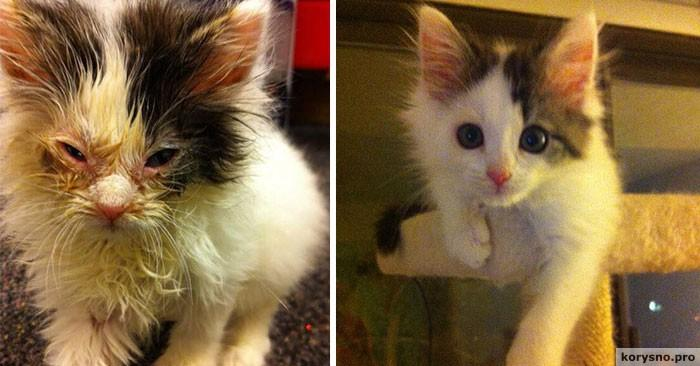 15 фото спасённых животных до и после