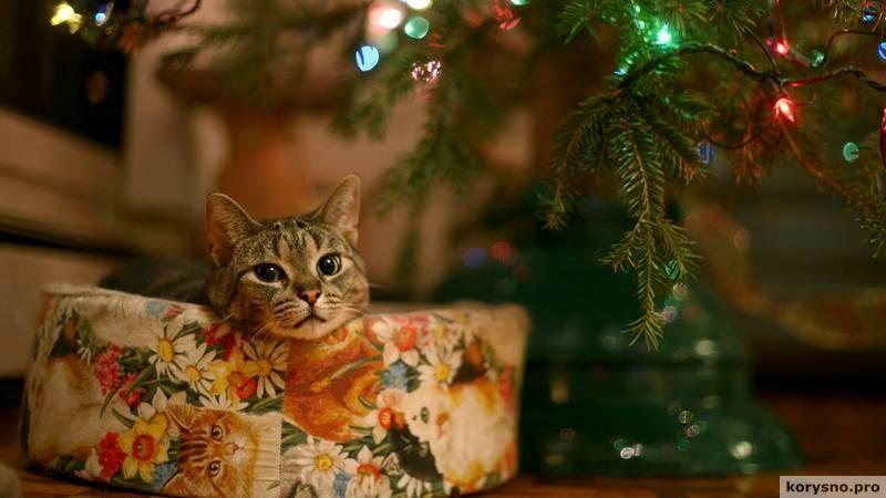 Как выбрать живую новогоднюю ёлку