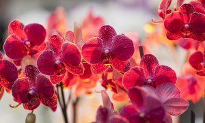Как правильно ухаживать за орхидеей