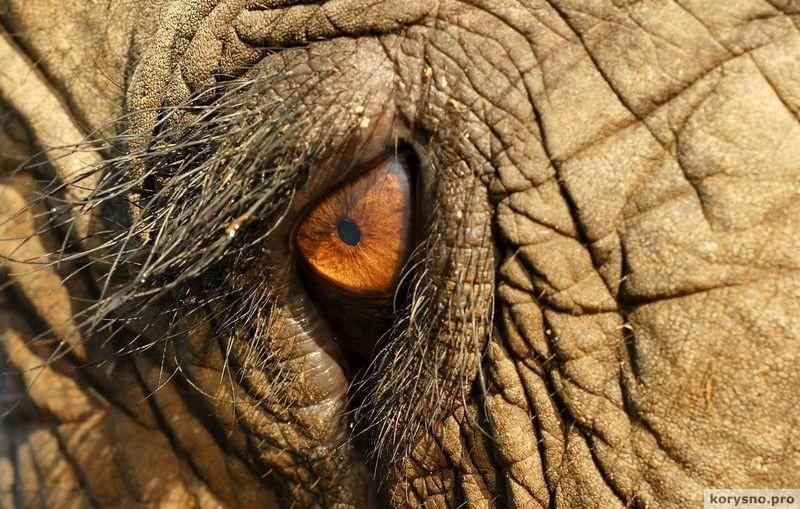 Трагическая судьба армянского слона Вовы