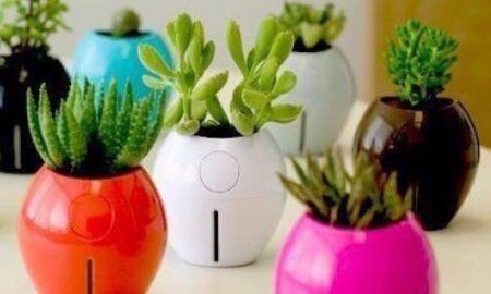 Домашние растения-пылесосы