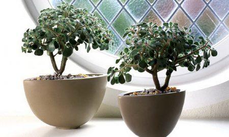 17 комнатных растений, которые нужны вам прямо сейчас