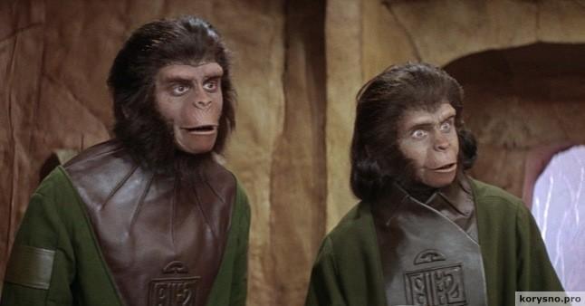 От обезьяны произошли только женщины