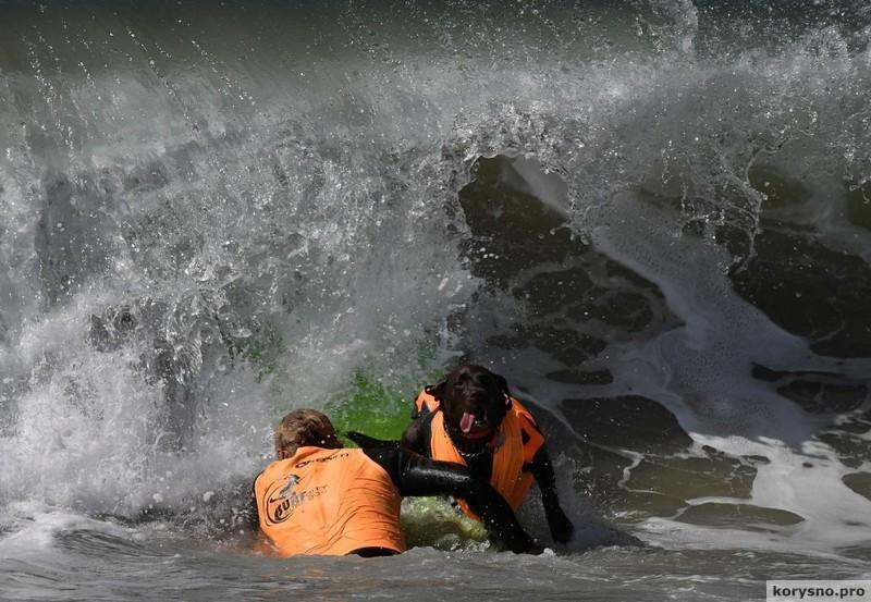 Фестиваль собачьего серфинга (фото)