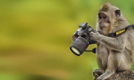 25 фотографий, которые стали победителями величайших фотошоп-сражений интернета