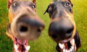Супер объявление о продаже комбеза для собаки