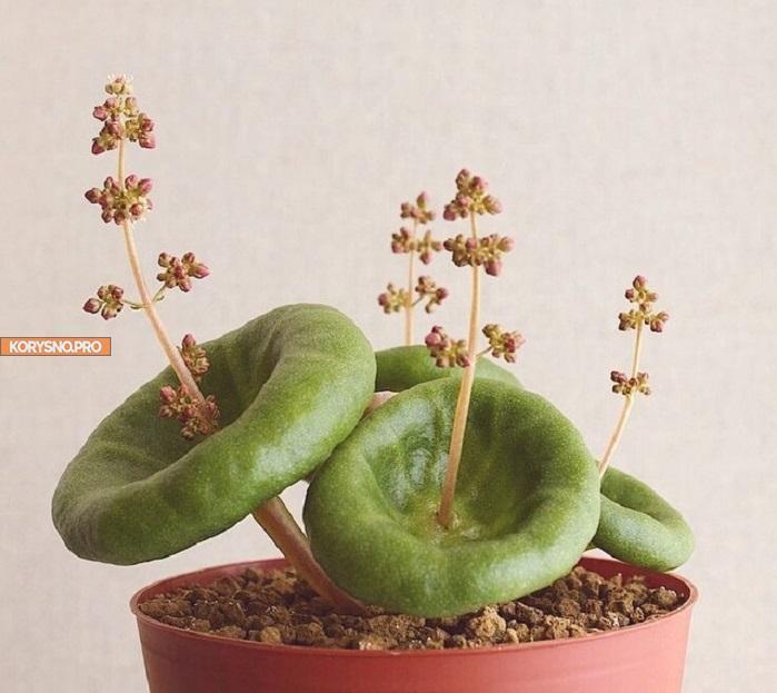 Самые необычные комнатные растения, которые имеют инопланетный внешний вид