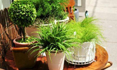 Лучшие комнатные растения, очищающие воздух