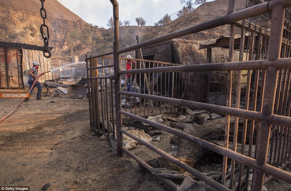 29 элитных скакунов сгорели на пожаре в Южной Калифорнии (фото)