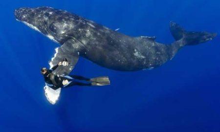 Кит спас женщину от тигровой акулы: невероятное видео, которое стоит увидеть!