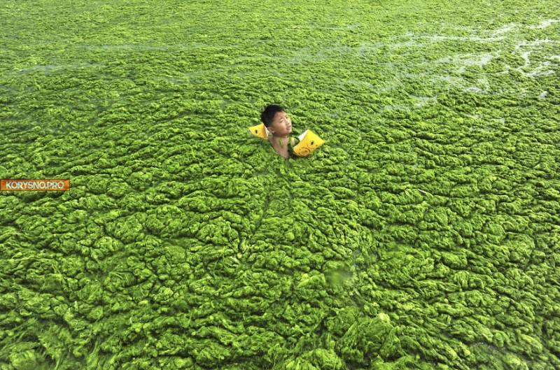 30 доказательств того, что человек продолжает разрушать природу