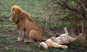 Секс, секс, секс в мире животных