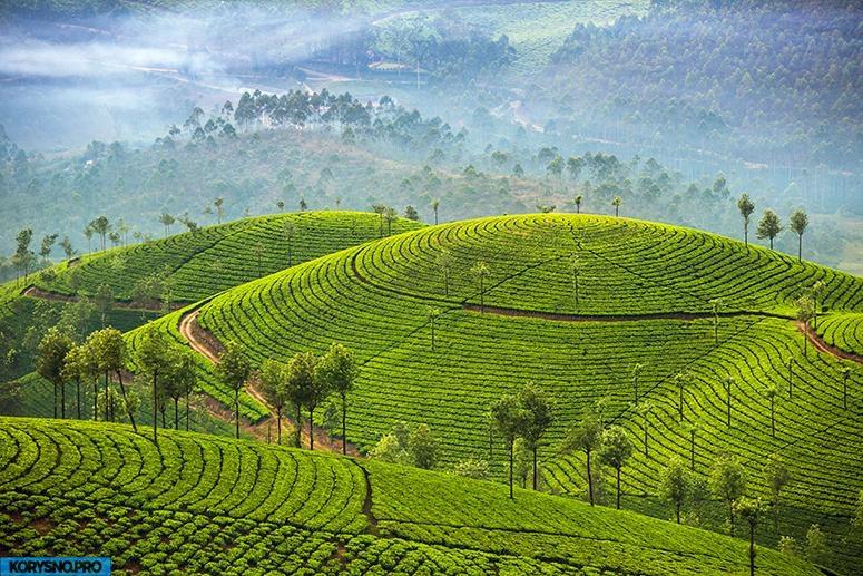 Шри-Ланка: интересные факты об удивительной стране