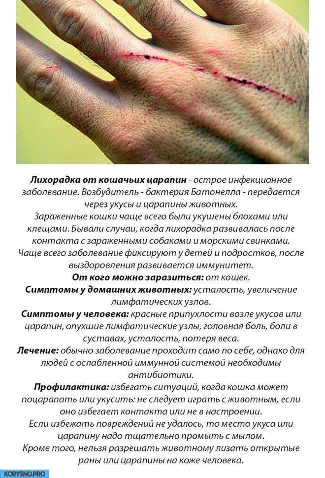 10 болезней, которыми вы можете заразиться от домашних животных
