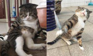 Ай Фей - очень эмоциональный кот, который тянет на звание короля драмы
