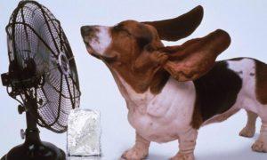 10 фактов о жаре: защищаемся! Советы