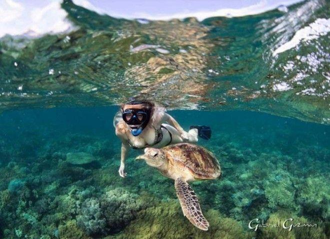 Удивительные кадры дайвера и подводного мира
