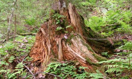 На Земле лесов нет!