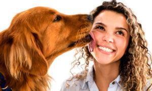 Из-за собачьих паразитов никогда не позволяйте вашей собаке лизать вас