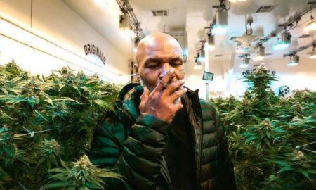 марихуана тайсон