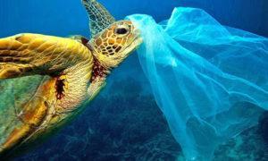 Средиземное море — самое грязное в Европе. Вот цифры