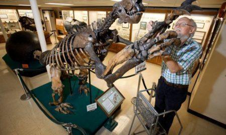 Пингвины, кенгуру и стрекозы: 10 животных, которые когда-то были гигантами