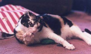 Кошка заходила в горящий дом 5 раз, чтобы вынести каждого своего котёнка