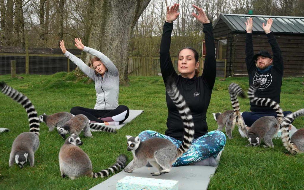 Йога с лемурами на улице: только в этом отеле в Англии