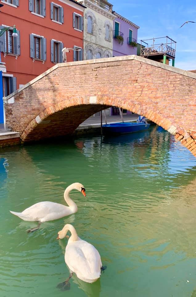 Как изменилась вода в Венеции за время карантина