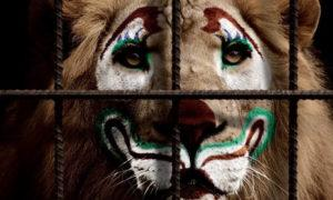 Работа в цирке и цирковые животные – правда изнутри