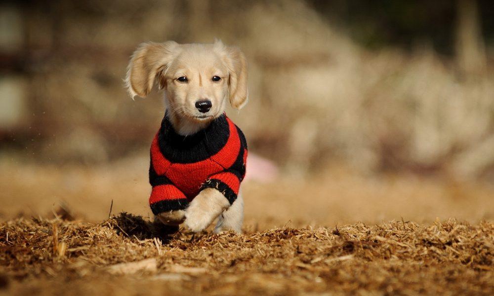 Комфортная и стильная одежда для домашних животных
